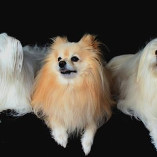 dogs-1668020_960_720
